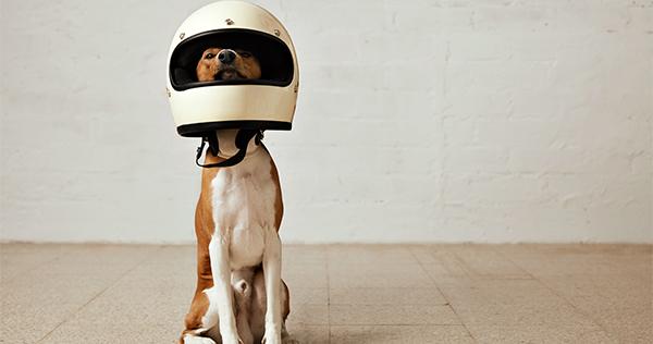 dia-mundial-perro
